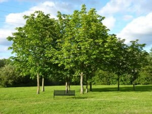 Winnersh_Meadows_Trees