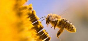 macro-bee_31082-1728x800_c