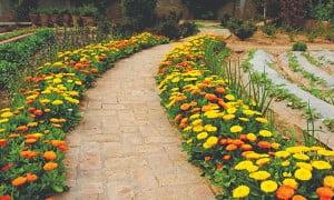 Calendula path