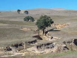 How land degradation and desertification affect our environment