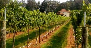 vineyard_house_view