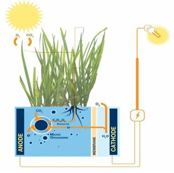 Phytoelectricity - 1