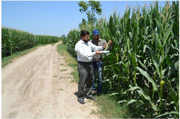 agronomist role-1