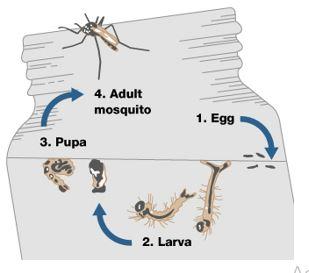 mosquito 2