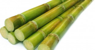 stack-of-sugar-cane