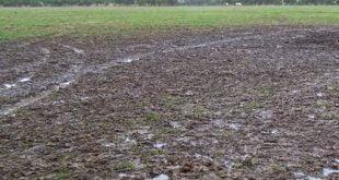 waterlogged soils
