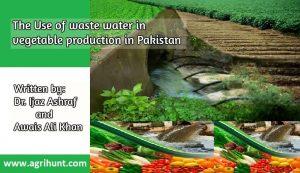 Vegitables Proction in waste water