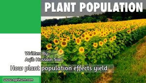 plantproduction