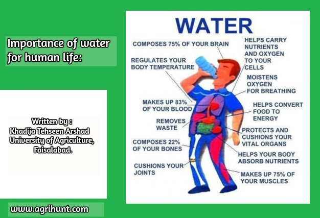 importance of water in human life Students take a fresh look at water and examine its critical importance to the   unit and reach conclusions regarding the importance of water to human health.