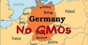 Germany-Follows-Scotland-Lead-And-Opts-To-Ban-GMOs