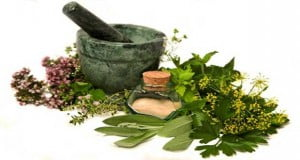 Plants-Herbs-That-Can-Boost-Lung-Health (1)