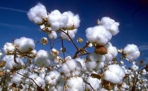 022309-Cotton-Center-460-284-PG-1