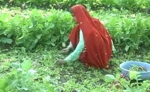 Bhopal_sewage_water_farming_650_27Dec14