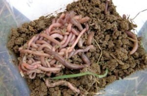 worms-collected-small