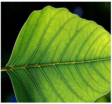 Phytoelectricity - 3