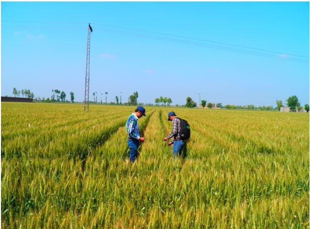 agronomist role-2