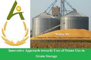Ozone for grain storage