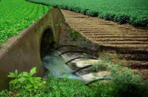 wastewater.irrigation.egetable.crops