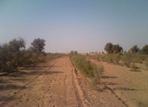 Tamrix planted in thal